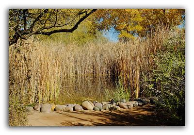 Desert-Pond