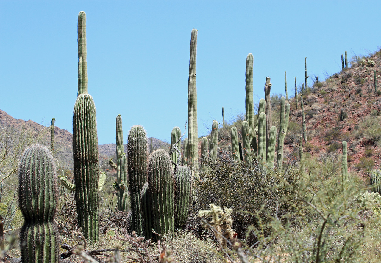 Saguaro National Park (West)