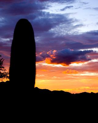 Silhouette of Saguaro Cactus at Sunset, Arizona