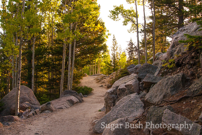 Aspens on the Trail, Rocky Mountain National Park