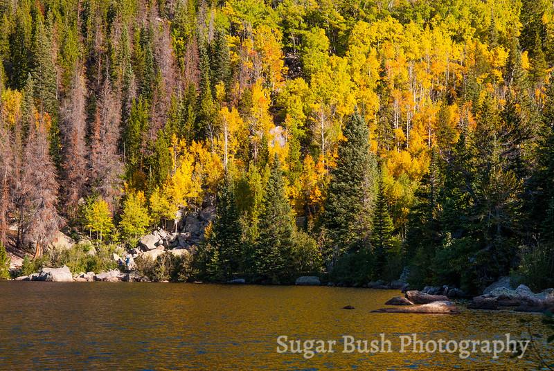 Bear Lake Aspens, Rocky Mountain National Park