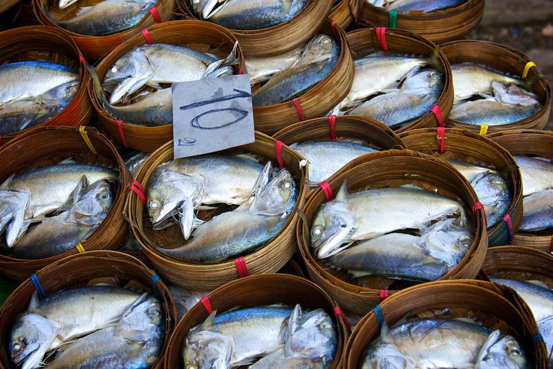 Fish on display - Samut Songkhram - southwest of Bangkok