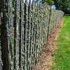 Lichen Covered Fence at Waimate Mission
