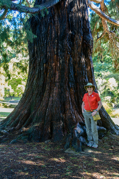Linda Giving Scale to Giant Tree