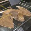 Lesser Long-eared Bat (or Geoffroy's Long-eared Bat); Nyctophilus geoffroyi.