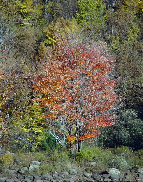 Foliage7932