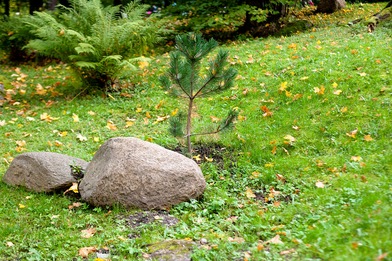 Stones and small tree