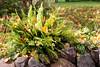 Autumn flowerbed