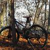 11-8-15: Where Rachael's bike took me today