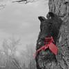 12-24-15: Guardian Bear.