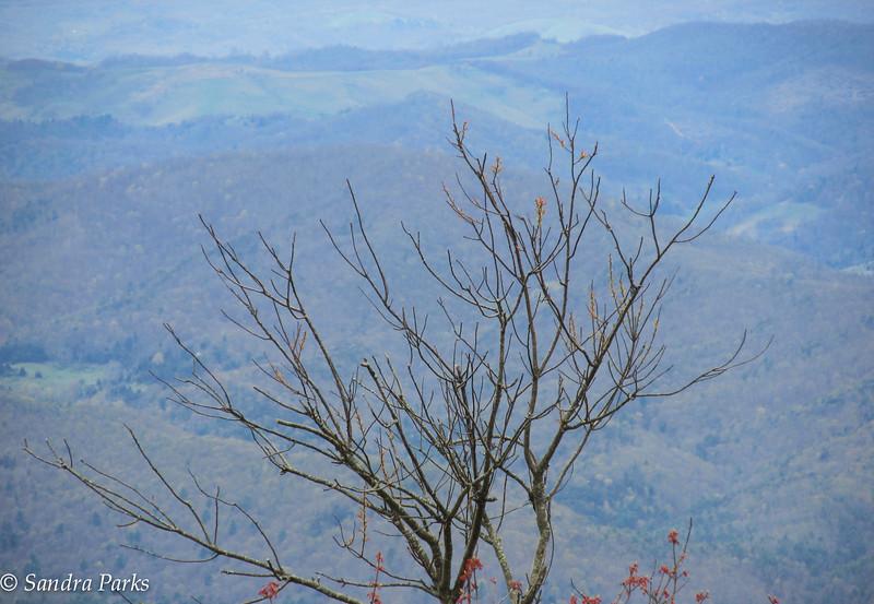 view from Reddish Knob