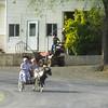 5-4-15: pony cart on Mole Hill/