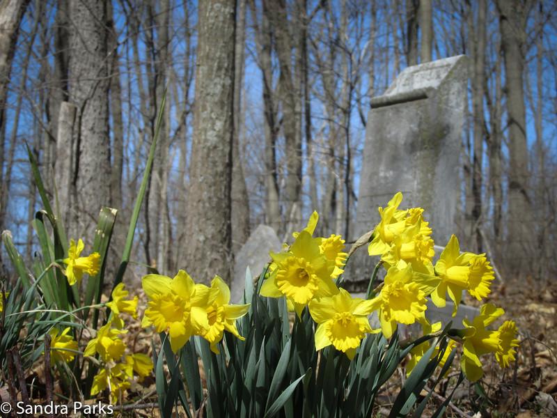 4-1-15: Springhill Cemetery (Black)