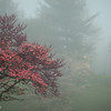 5-2-15: Morning fog, at the end of the street
