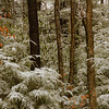 01-25-2020: in the West Virginia woods