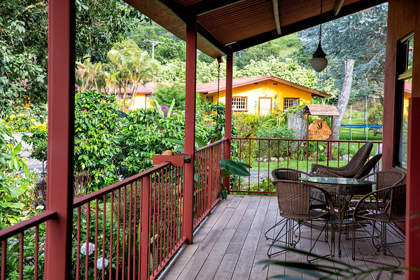 Back Porch of our Casita.  Perched on the railing is one of the Flame Colored Tanagers.