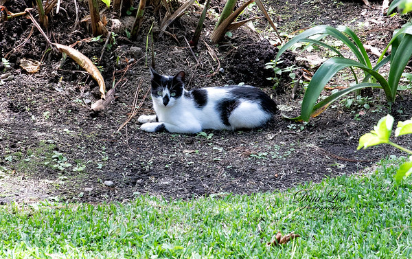 One of many kitties roaming the property of El Santuario Estate.