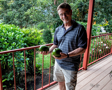 Wow, those are some really big Avocadoes!