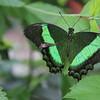 Lewis Ginter Botanical Garden, Richmond VA