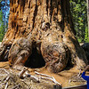 JMR and General Grant tree