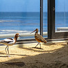Monterey Aquarium: Sea Birds