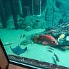 Notice underwater door in background,