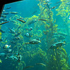 The Monterey Aquarium has huge tanks with many types of fish