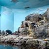Monterey Aquarium: penguins