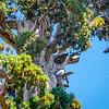 Kings Canyon, General Grant Grove, General Grant close-up