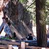 Sequoia ctoss-section