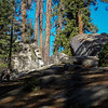 Rock with a partial face on the General Sherman Tree Trail
