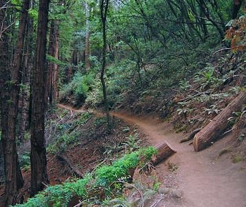 The trail cuts through a fallen redwood.