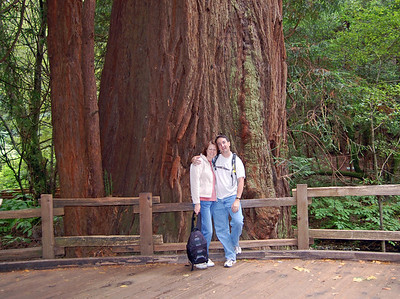 Muir Woods: The biggest redwood we found, right off the main trail.