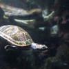 Turtling Along