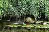 Snail Fountain