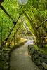 Bamboo and Lanterns