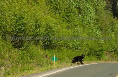 Yes, I waiting for him to run away.  British Columbia.