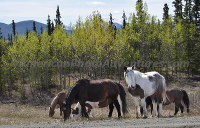 Wild horses were a welcome sight.