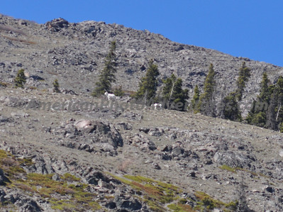Even spotted some Dall Sheep high on a nearby mountain.
