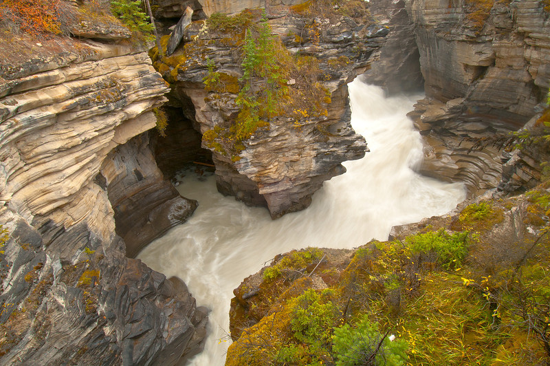 TRCA-11091:Athabasca Canyon in Jasper National Park