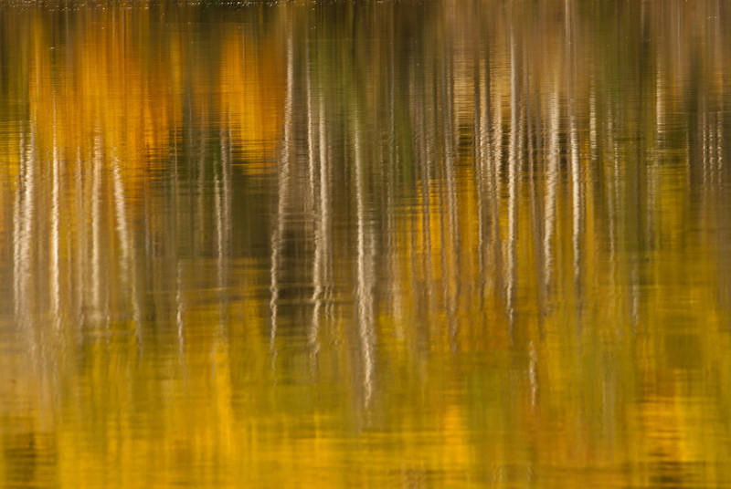 TRCA-11138: Aspen reflections on Pyramid Lake