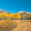 TRCA-11062: Fall color in Bow Valley