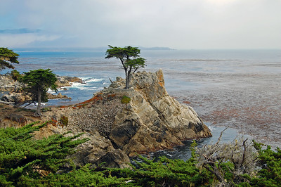 The Lone Cypress - highlight of the 17 mile drive.