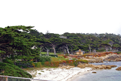 Coastline of rocks, cypress trees and homes on the 17 mile drive.