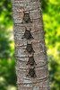 Bats lined up for a nap