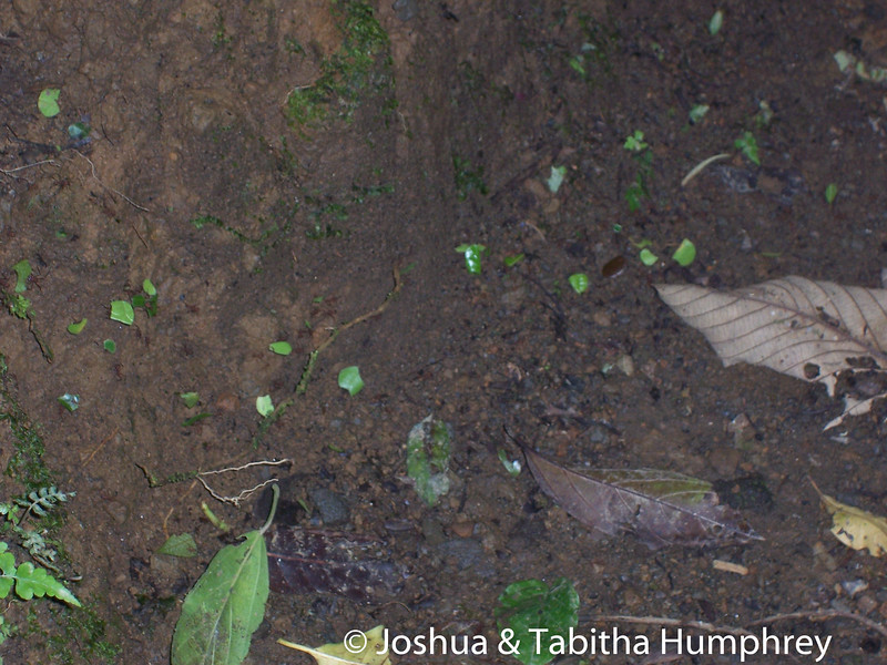 Leaf cutter ants from above.