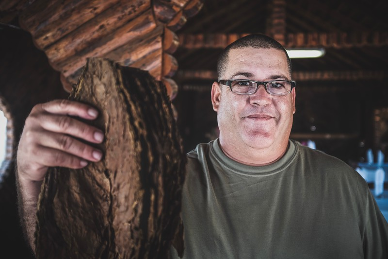 Ronald shows us the different types of dried tobacco leaves used for rolling cigars in Pinar Del Río.