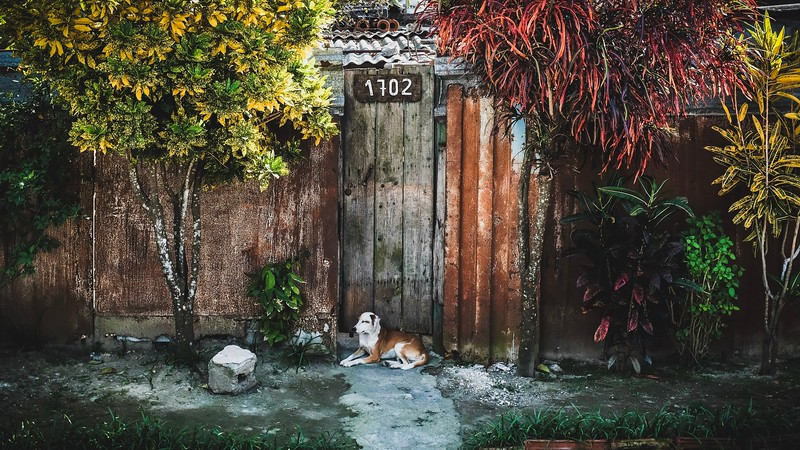 A dog stands guard in front of a home in Cienfuegos, Cuba.