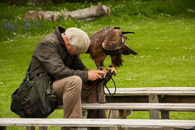 Falconer and Golden Eagle