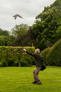 Goshawk Action